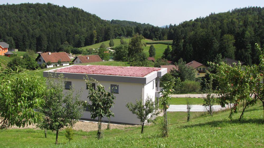 Ekstenzivna zelena streha