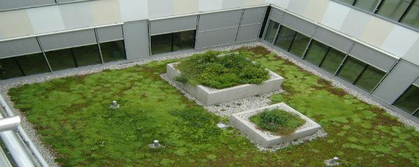 Gradnja zelene strehe rastline