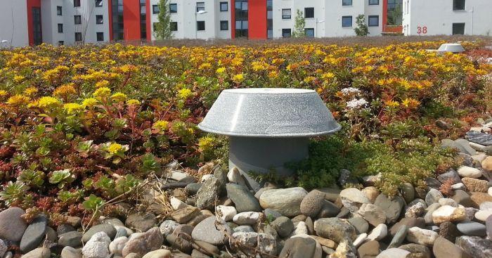 zelena streha izvedba