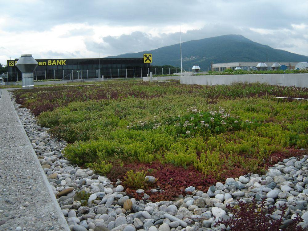 Ravna zelena streha