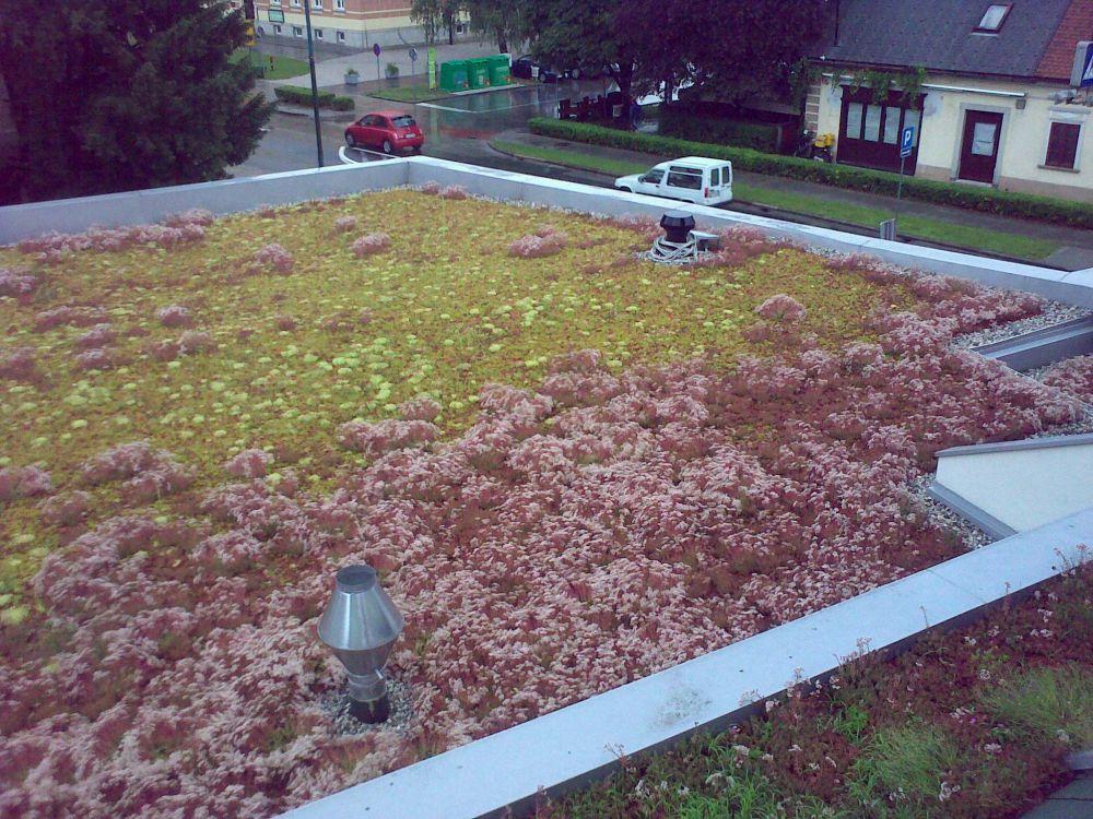 Ozelenitev ravnih streh z Aurig ali Xeroflor