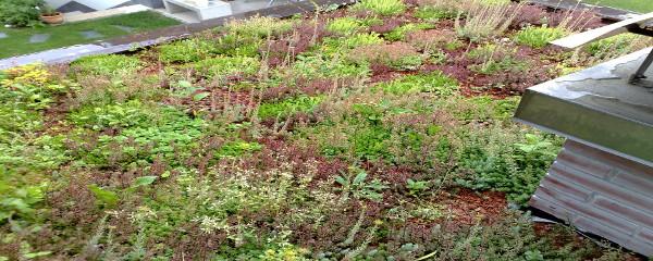 sestava zelene strehe z rastlinami